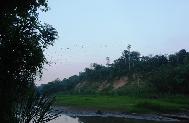 Udsigt over Clays Lick i Amazonas regnskov, Peru