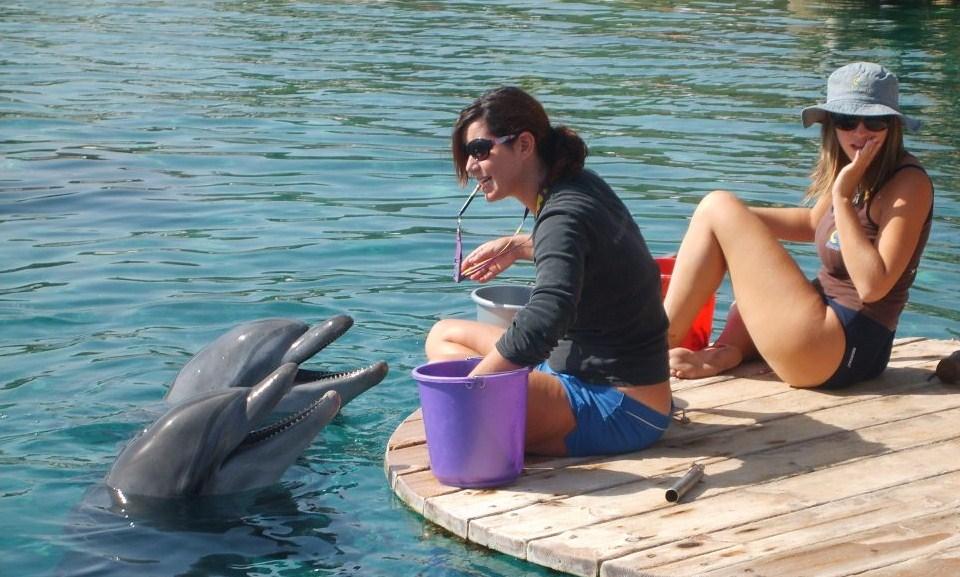 Delfiner fodres i Eilat. Kan opleves på en ferie i Eilat