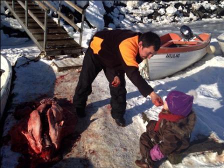 Nyfanget sæl - en del af grønlandsk mad