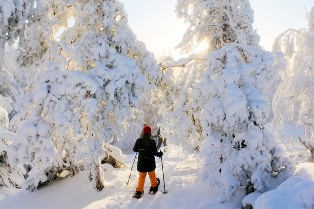 Koli National Park Finland Foto: Taina Värri
