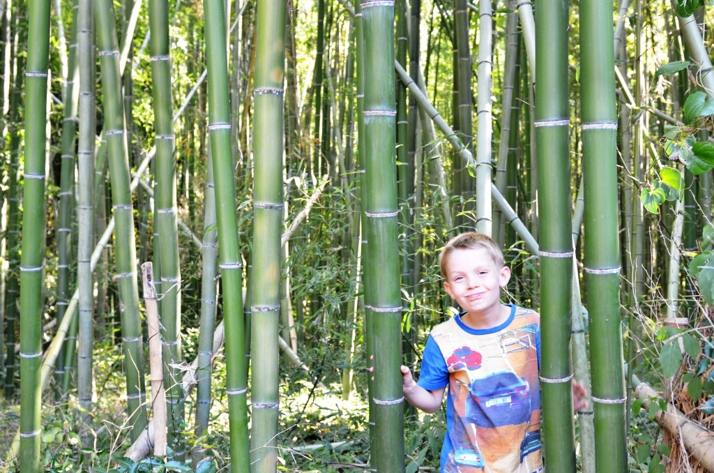 Rejseguide til Kyoto: Bambusskoven