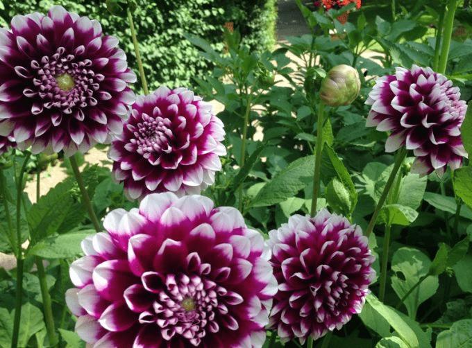 Blomster på Sollidens Slott