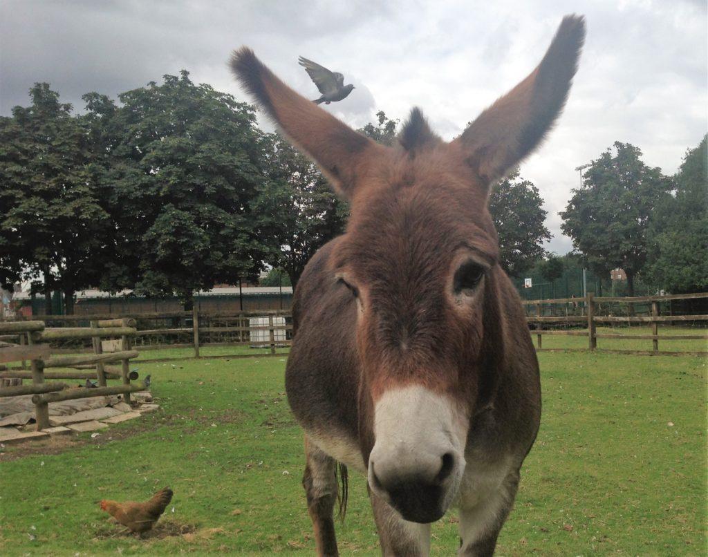 Donkey at Hackney City farm