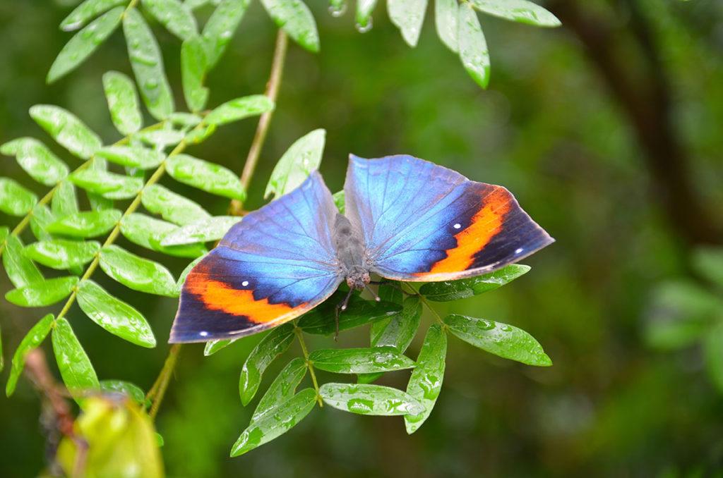 På sommerfuglefarmen Entopia kan man få sine sommerfuglelyster styret.