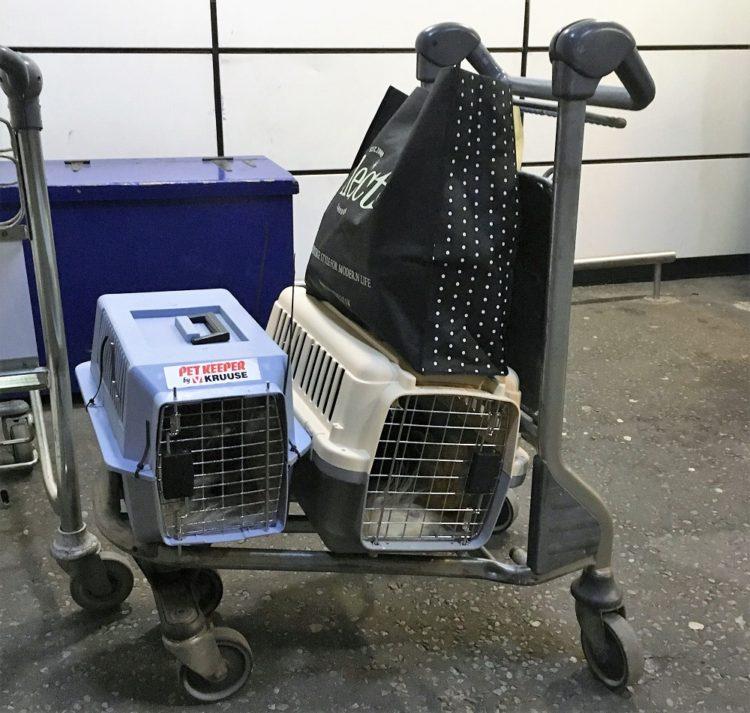 Katte i bokse under en rejse med katte