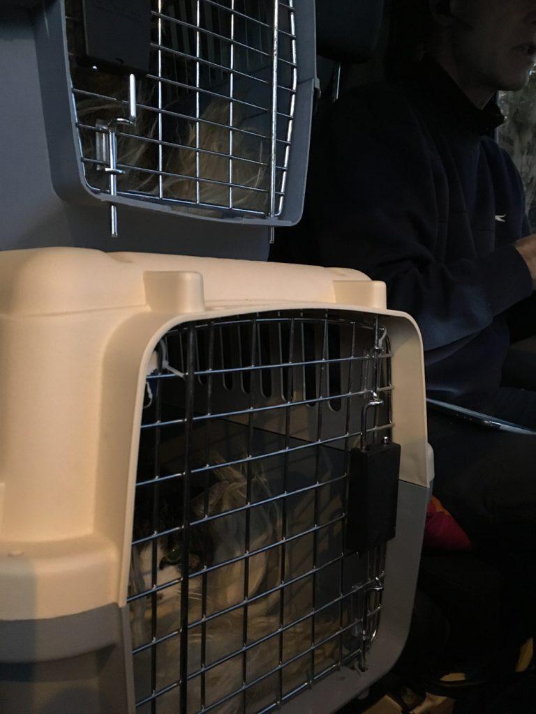 Misfornøjede katte på rejse i en lastbil