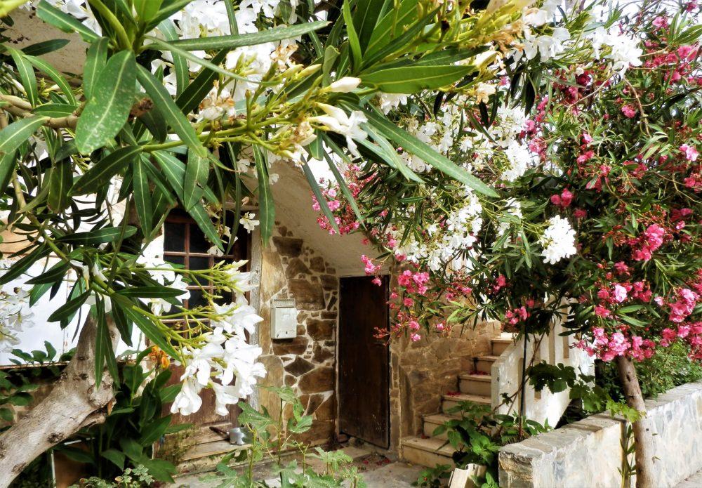 Autentiske Kreta: Hus i landsby