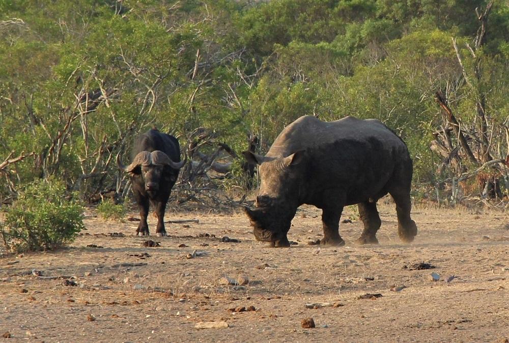 Dyr på safari i Sydafrika