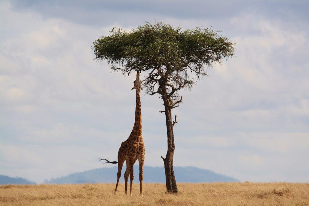 Det bedste af Afrika