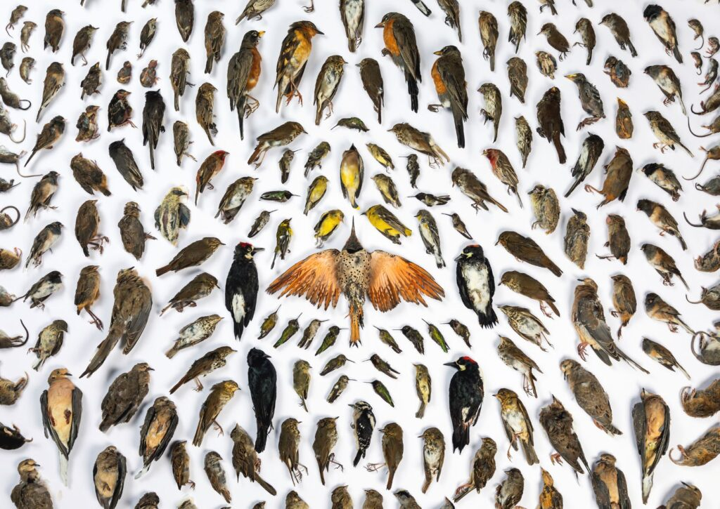Foto: Jak Wonderly/ BigPicture Photography Competition 2020. These images originally appeared on bioGraphic, an online magazine about science and sustainability and the official media sponsor for the California Academy of Sciences' BigPicture: Natural World Photography Competition.